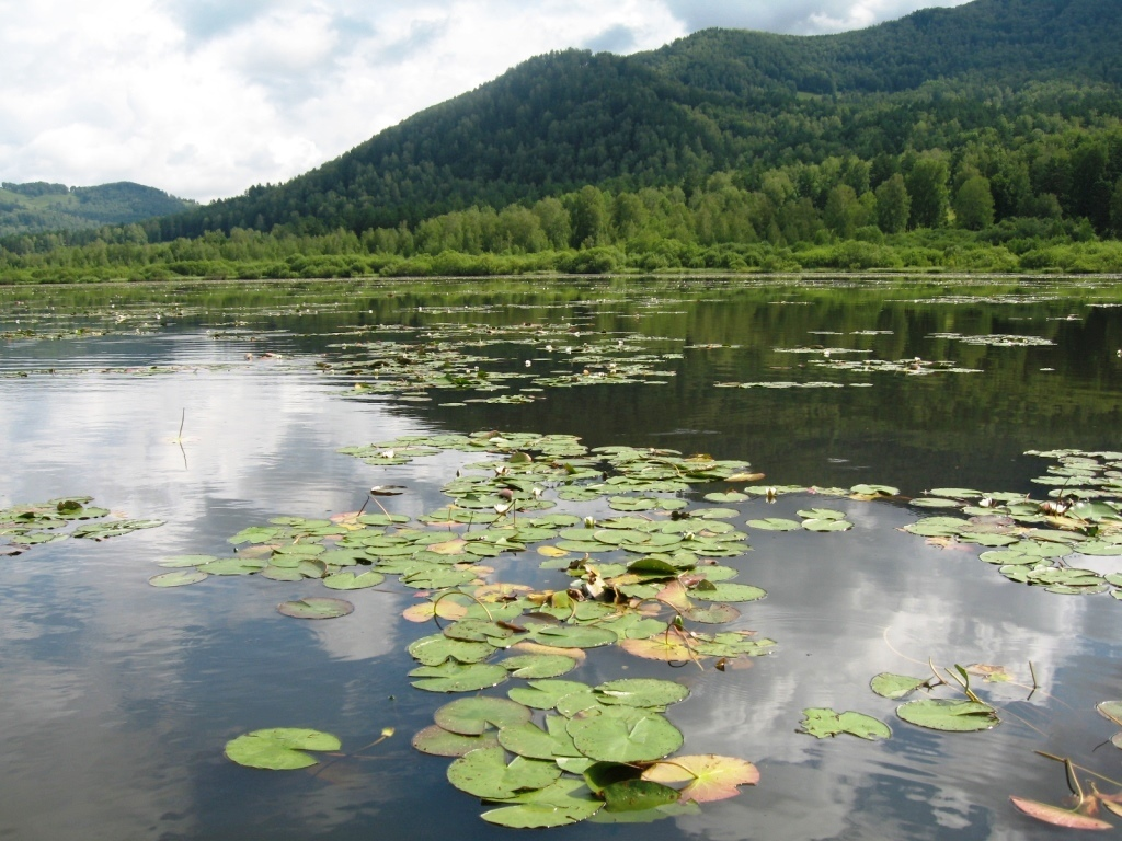 решено озеро манжерок картинки мирно пообщались